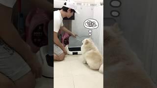 Dạy chó đi vệ sİnh tr๐ng nhà tắm được không? | Cách Huấn luyện chó cơ bản BossDog
