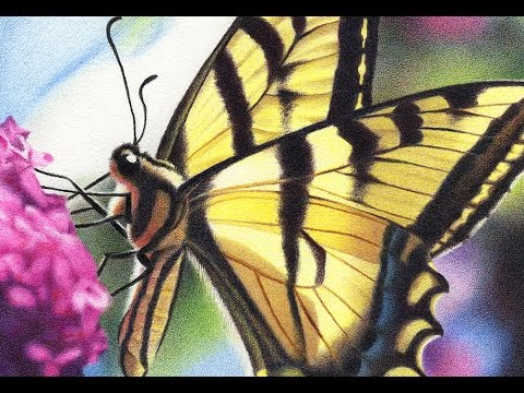 COLORED PENCIL Tutorial: Swallowtail Butterfly - YouTube