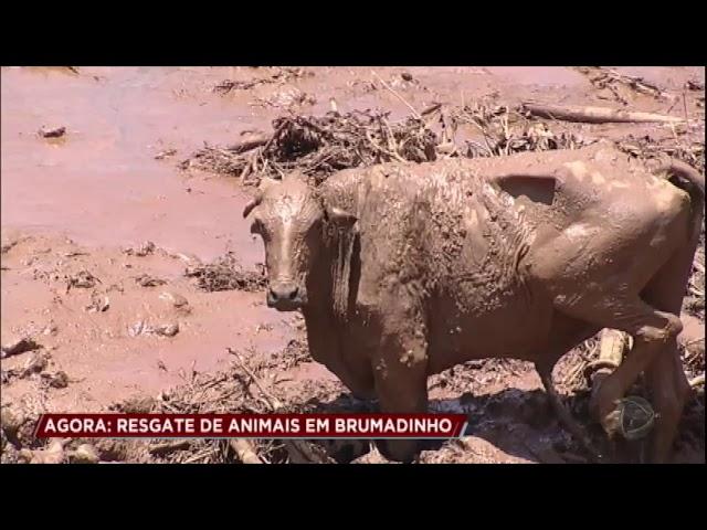 Luisa Mell relata como os animais são resgatados em Brumadinho