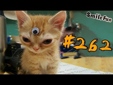 2019     Funny Cats 2019