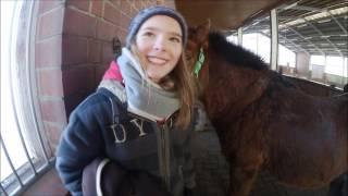 Neues Pony?...| HeyHorse