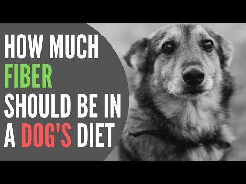 How Much Fiber Should Be In A Dog's Diet