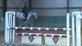 7 yo dutch gelding january 17 2015