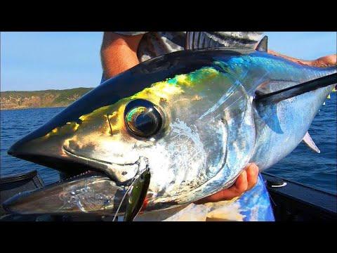Melbourne Tuna Frothin