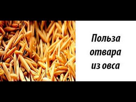 Овес | Польза и противопоказания - YouTube
