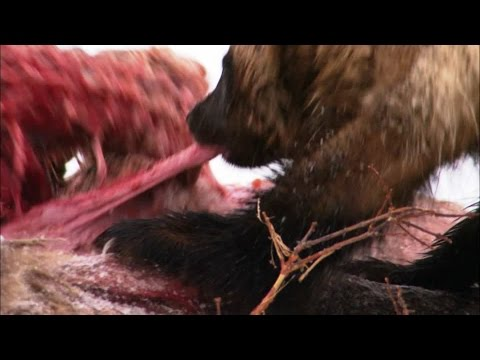 Wolverine Deadliest killers Hunger Race by Monetrio AnimalFightClub