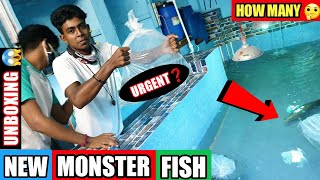 Adding *New* Fish | Unboxing N…