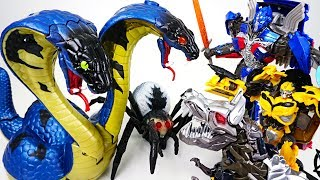 Giant two-headed cobra appeared in ruins! Go! Transformers Optimus Prime, Bumblebee! - DuDuPopTOY thumbnail