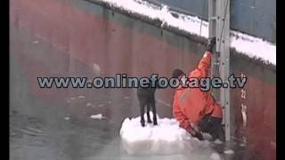 Dog Dzhulka's lucky escape from the ice floe by a russian fisherman in the Sea of Okhotsk