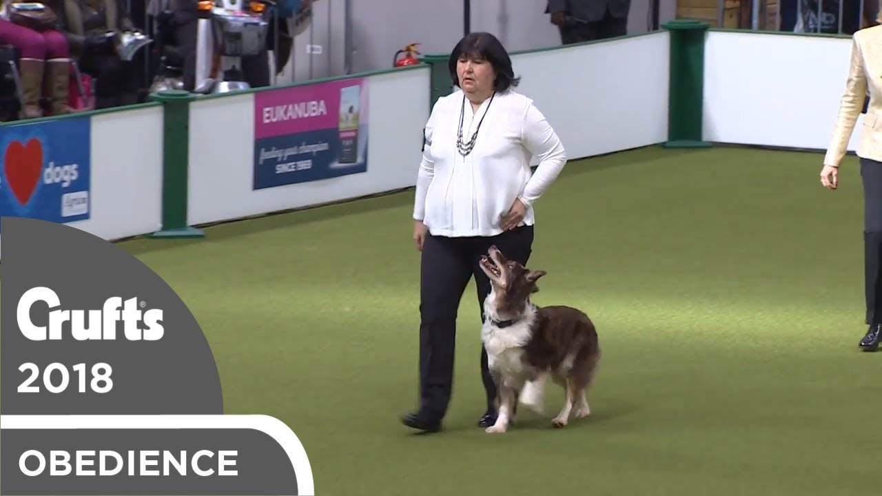 Obedience - Dog Championship - Part 11   Crufts 2018