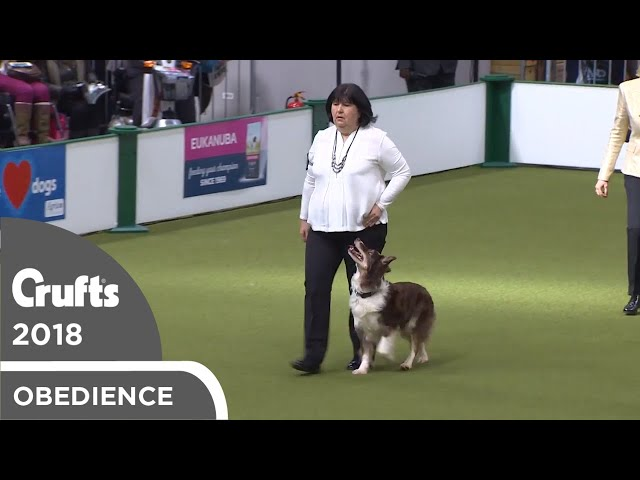 Obedience - Dog Championship - Part 11 | Crufts 2018