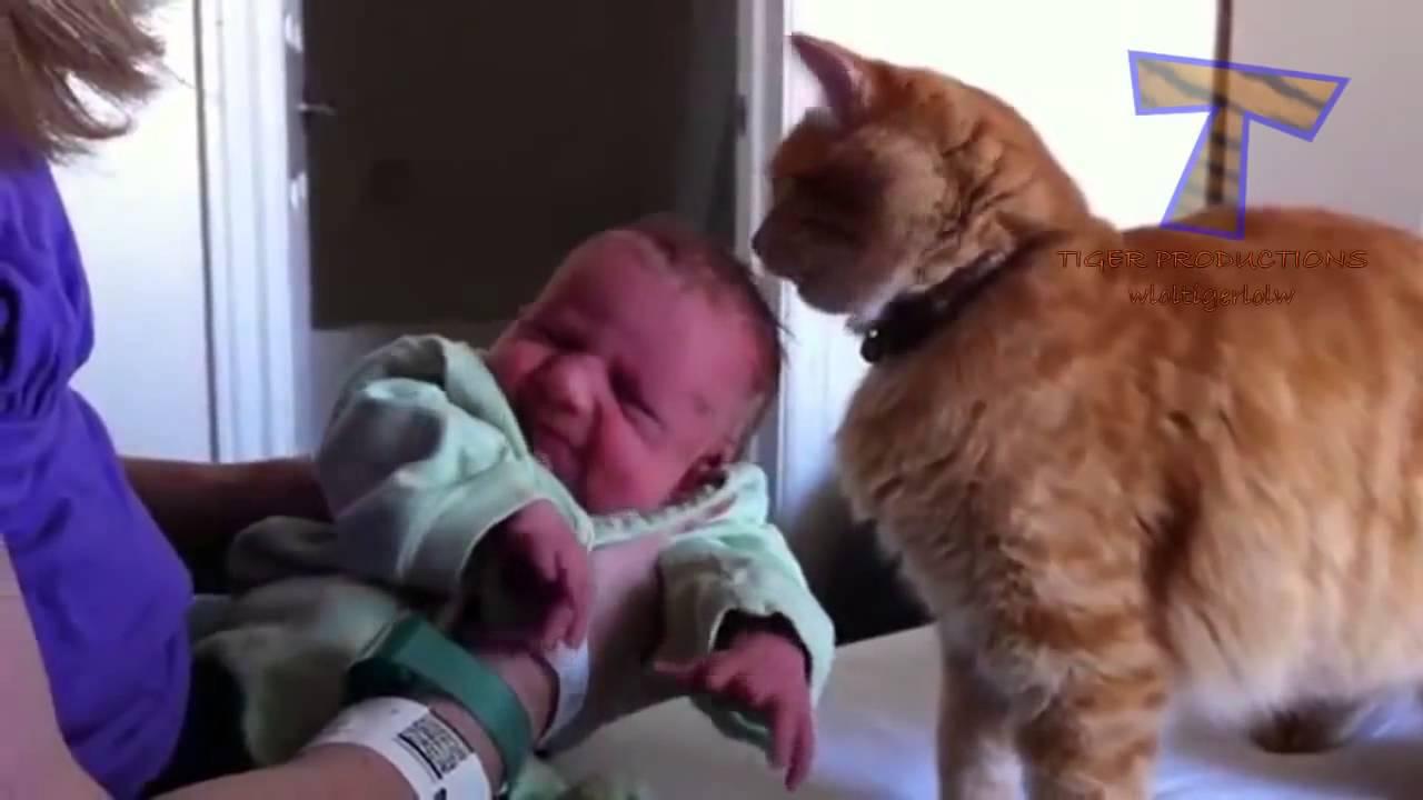 Как Дружат Между Собой Кошки Собаки И Маленькие Дети