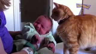 Как Дружат Между Собой Кошки, Собаки И Маленькие Дети.