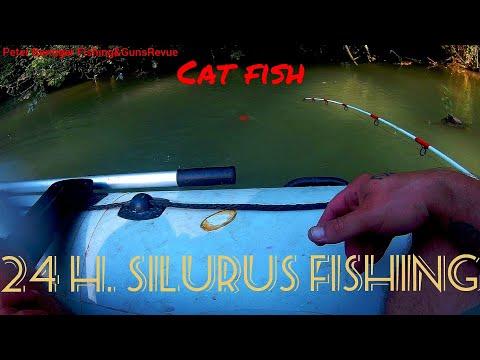 24 Hour Silurus/Cat Fishing