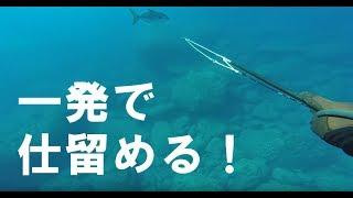 小笠原弟島で魚突きしたときの動画です。 70cm前後のヒレナガカンパ...