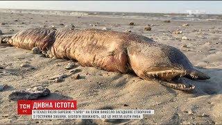 Після буревію 'Гарві' на американському пляжі знайшли дивну істоту