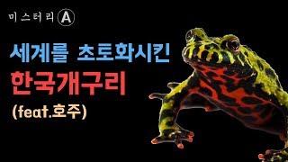 외국 생태계 초토화, 한국개구리 / 전 세계를 초토화 시킨 한국 개구리