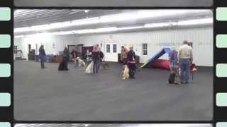 Alden's Kennels World Class Pet Training & Resort Chicago Il.