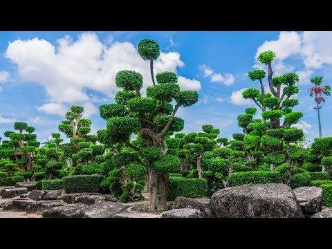 Nong Nooch Pattaya Garden & Resort, Beautiful park in Thailand