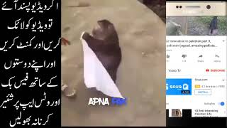 animals funny video's , funny videos //