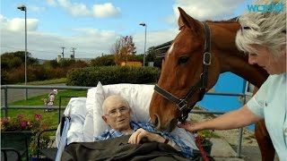 Dying Man Says Goodbye to Beloved Horse