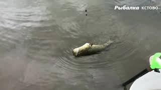 Рыбалка осенью на поплавок могло быть и лучше