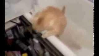 돼지 고양이 ㅋㅋ 생 용천을 곳하는 ㅋ 돼냥이