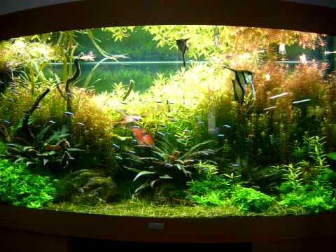 aquajardin gloucester juwel vision 450 planted display aquarium youtube. Black Bedroom Furniture Sets. Home Design Ideas