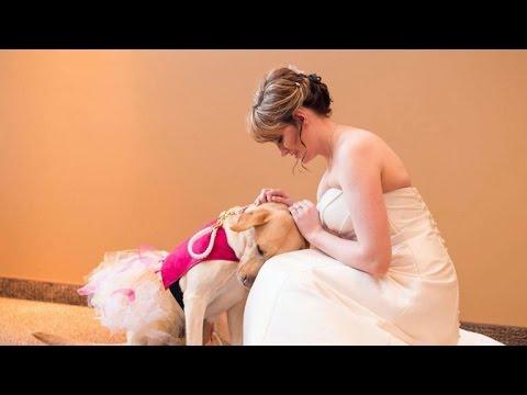 Photo of service dog, bride goes viral