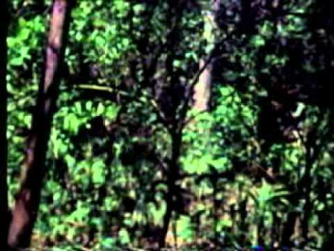 Tigress Khairi documentary part 1