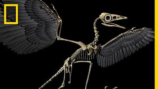 Are Birds Modern-Day Dinosaurs? | National Geographic