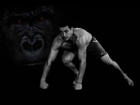 Gorilas by Animal Motion