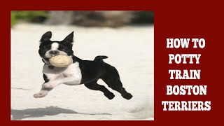 How To Potty Train Boston Terriers