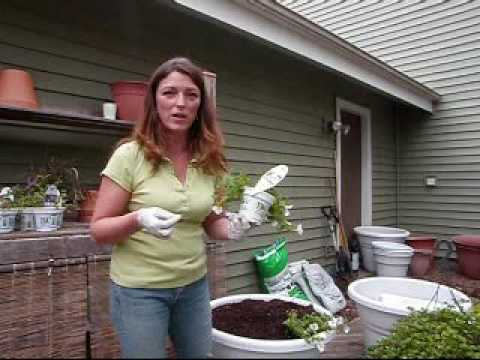 Planting A Green Container Garden - Save Money & Water!