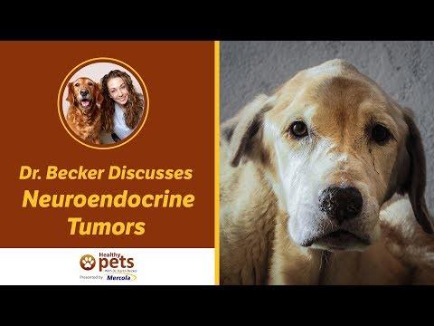 dr.-becker-discusses-neuroendocrine-tumors