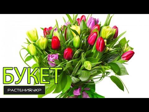 Картинки Букеты цветов Цветы Картинки 24 скачать