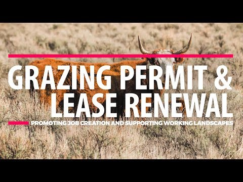 Grazing Leases and Permits Explained