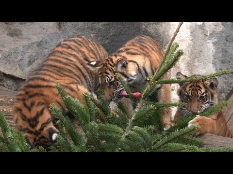 Christmas tree feast for animals at Berlin zoo