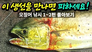 Squid fishing in Korea, dolphinfish raid