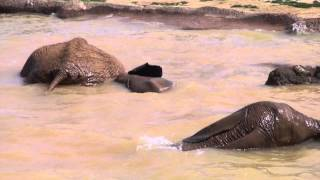 Nandi Plays in the Mud and Goes for a Swim