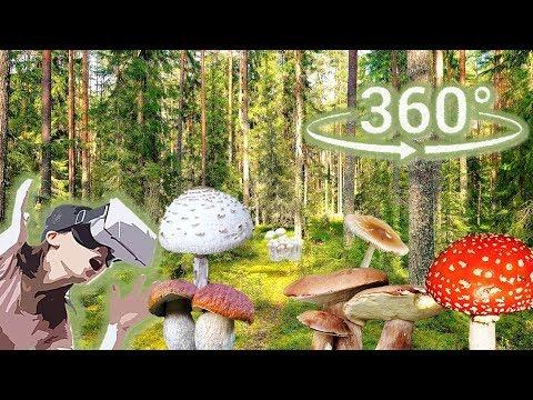 Панорамное Видео 360 VR 4K для очков виртуальной реальности.Собираю грибы.