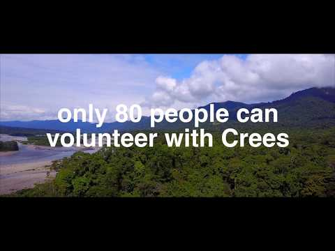 Volunteer in the Peruvian Amazon with the Crees Foundation - Make a difference in 2018