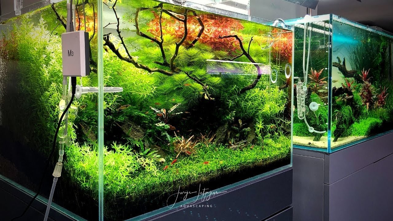 60cm Aquascape At Zoo Flottmann 90 Days Update Youtube