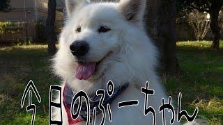 ヨリミチ団の看板犬「ぷー」の日常です サイトはこちら→http://yorimich...