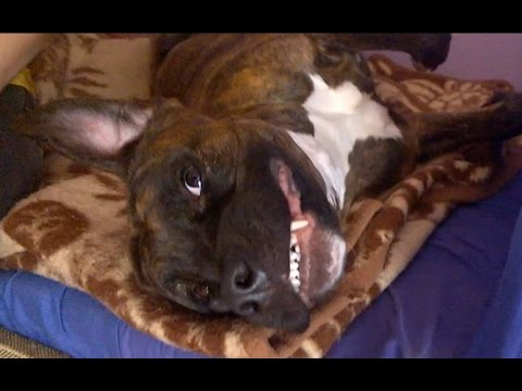 10 Signs Your Dog is Happy