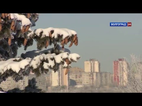 Акция Покормите птиц зимой
