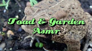 Toad & Garden Asmr