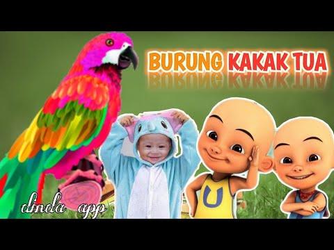 Burung Kakak Tua Upin Ipin Lagu Anak Balita Populer Upin Ipin Burung Kakaktua Youtube