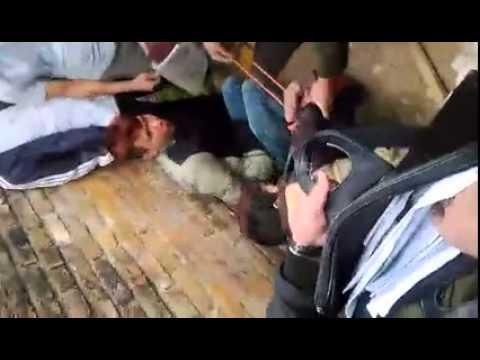Cẩu tặc bị người dân trói tay bắt kéo chó đi khắp làng   Chó la ăng ẳng tội nghiệp quá!