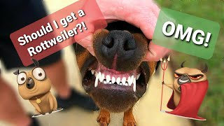 Is the Rottweiler the Right Breed for You and Your Family?